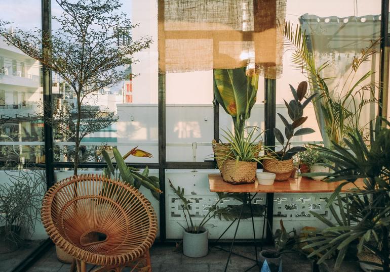 Zieleń w domu - dobierz odpowiednie rośliny i ciesz się ich piękne na co dzień