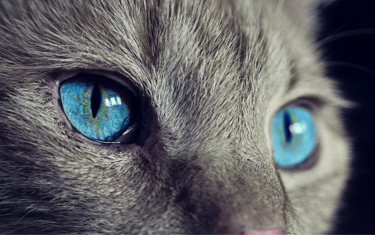 Jak wybrać najlepszą karmę dla kota?